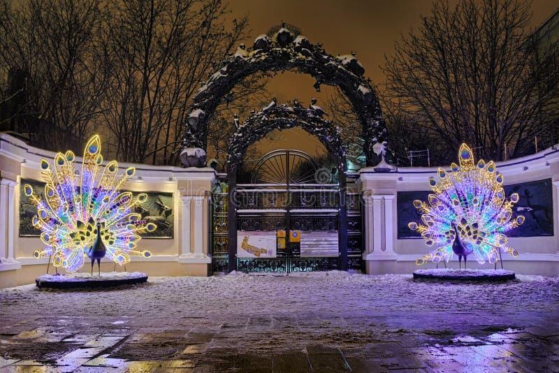 在入口的美丽的孔雀对庭院圆环的莫斯科动物园 免版税库存照片