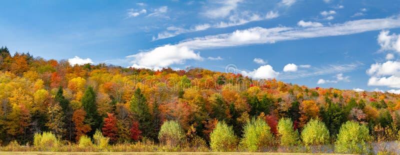 在全景新英格兰风景的五颜六色的秋天森林叶子 免版税库存照片