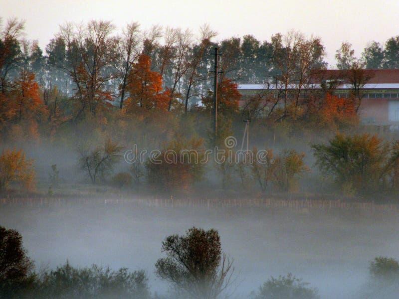 在全景池塘的雾早晨 库存图片