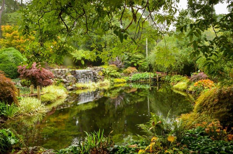 在公园中间的小池塘 免版税库存照片