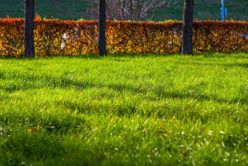 在公园使用的绿草作为背景 库存图片