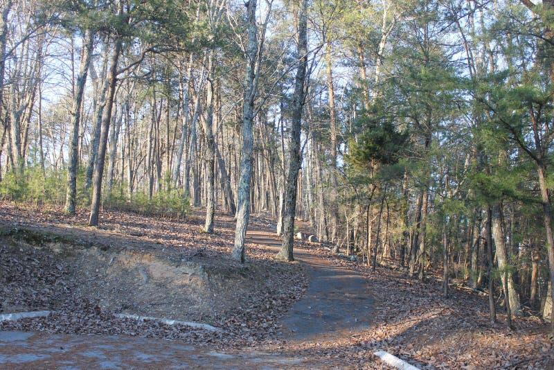 在公园和森林的晴天 库存图片