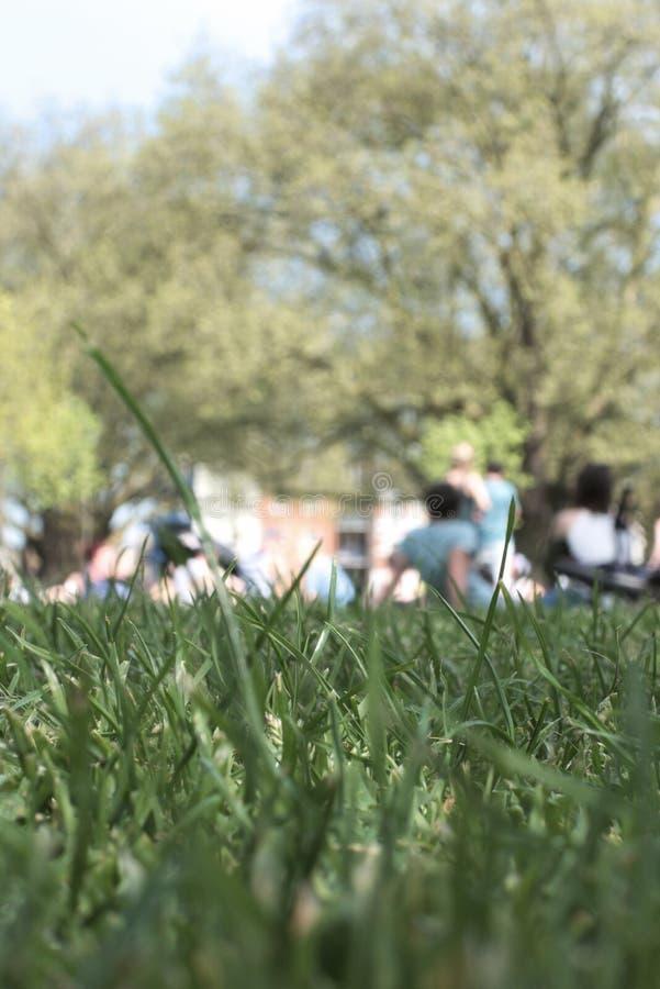 在公园在一夏天` s天在伦敦 免版税库存照片