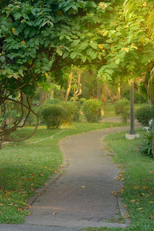在公园或庭院盖子的步行方式有树枝的 免版税库存图片