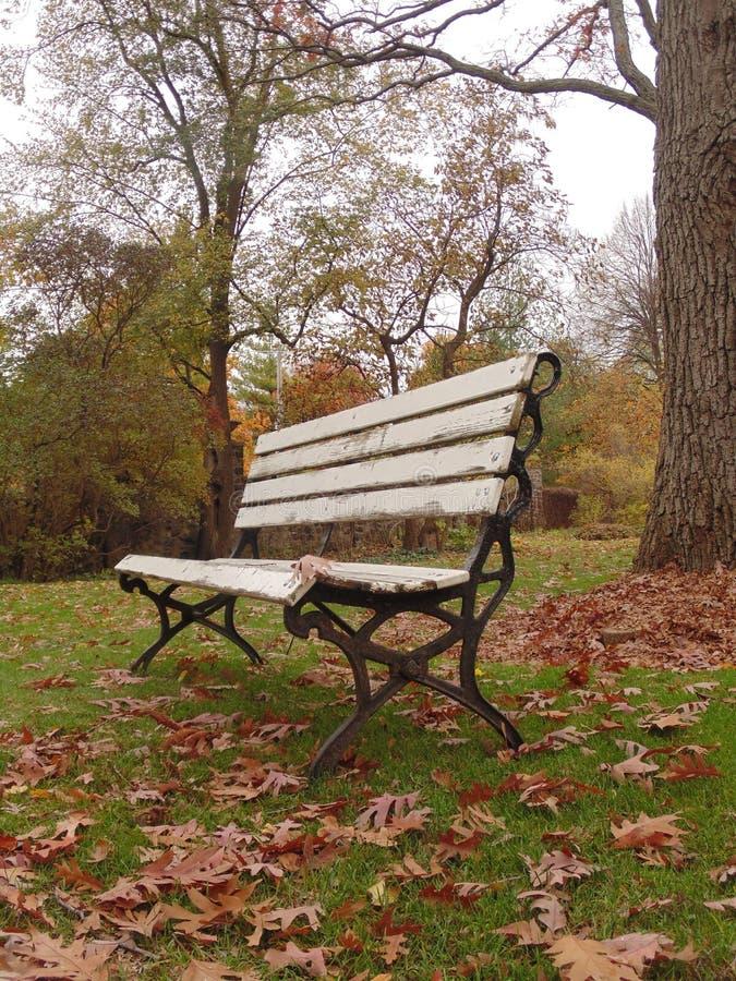在公园换下场 库存照片