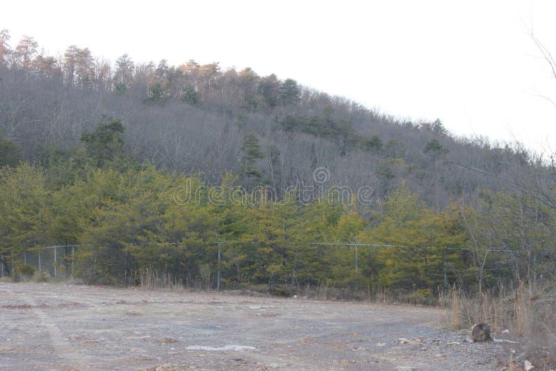在公园杉木和山的晴天 库存照片