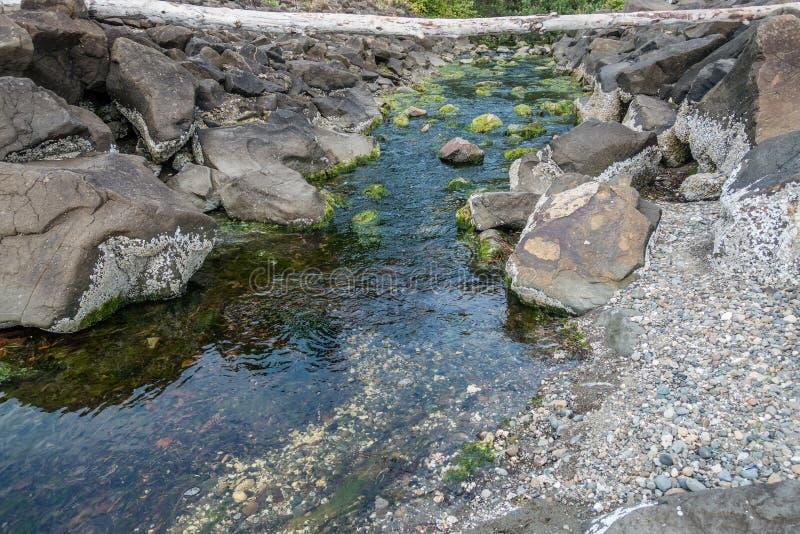在公园的小河 库存照片