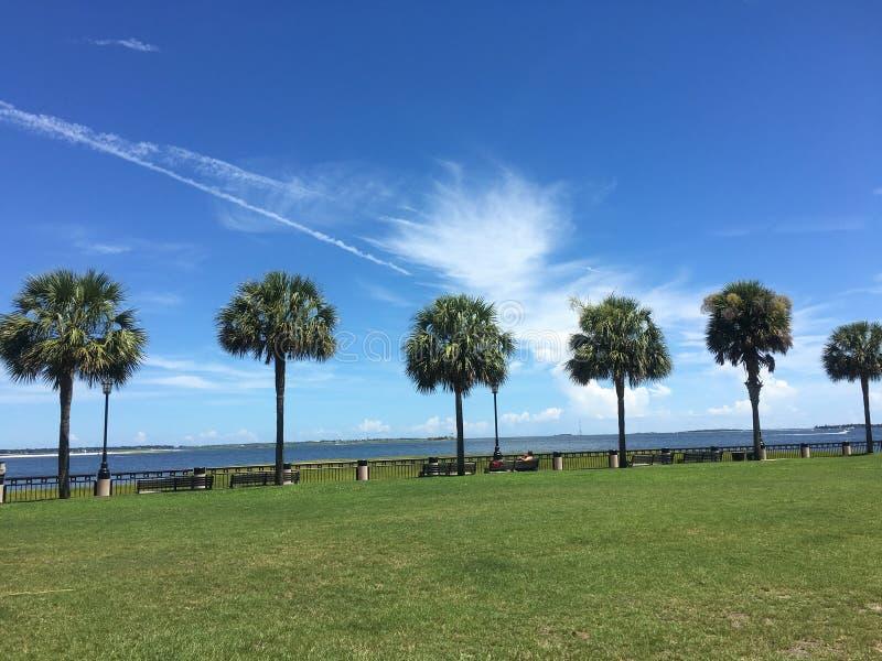 在公园的棕榈树 图库摄影