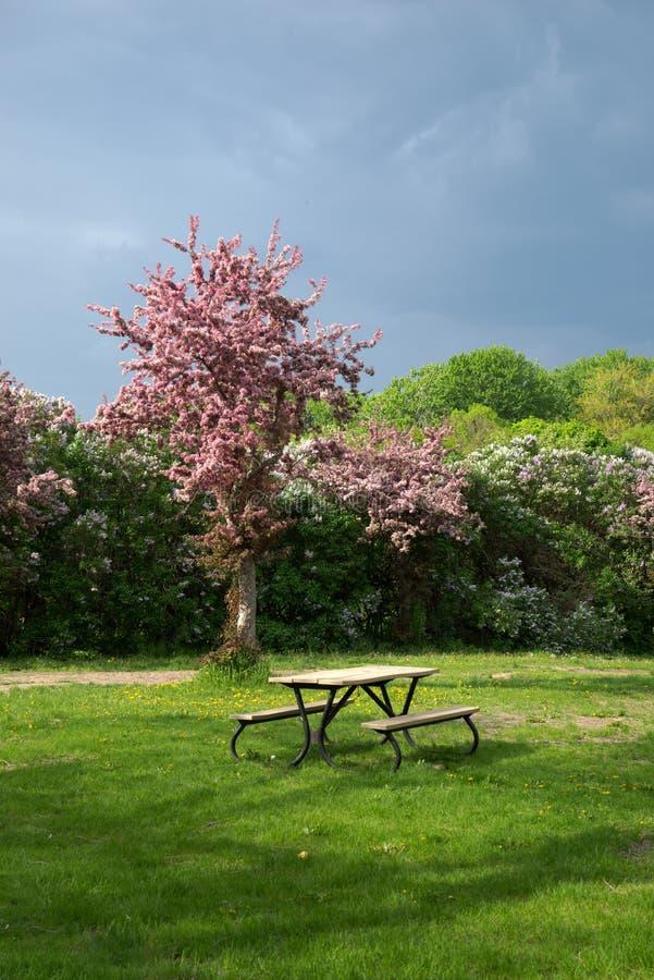 在公园的野餐桌 库存图片