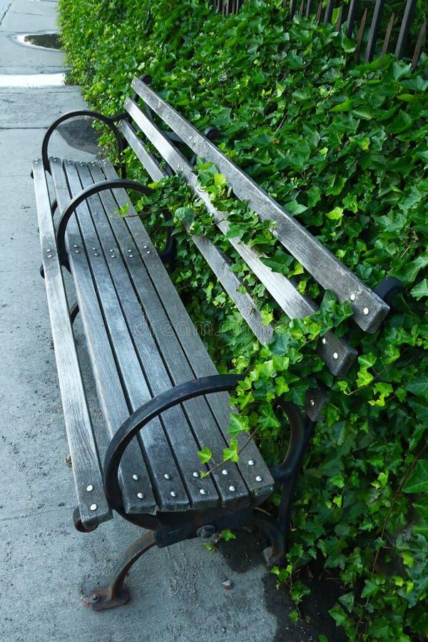 在公园长椅外面的常春藤峰顶 免版税库存图片