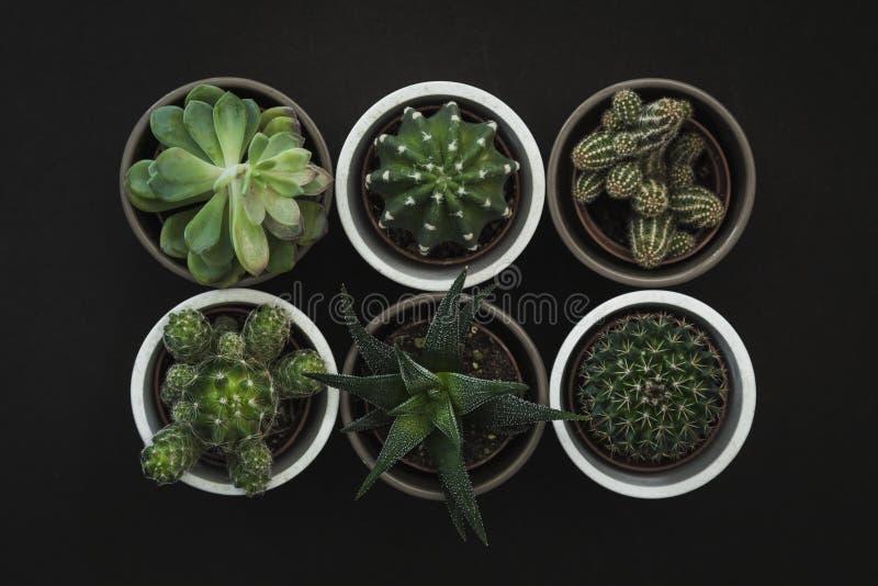在六个小仙人掌和多汁植物下看法的上面罐的 库存照片
