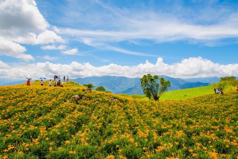 在六十斯通山的黄花菜花 库存照片