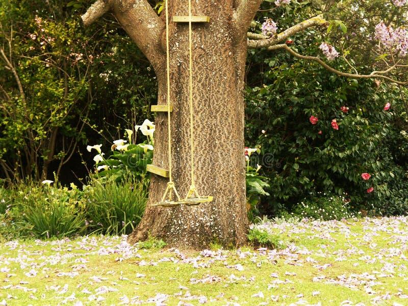 在兰花楹属植物树的摇摆 免版税库存图片