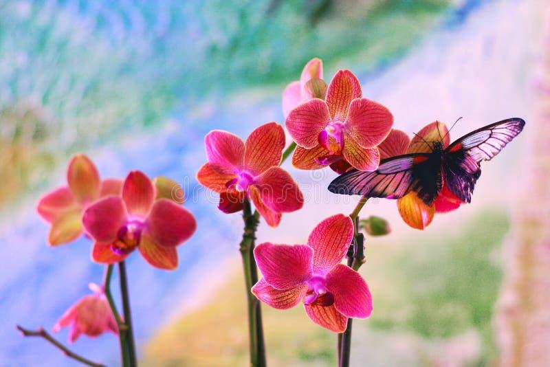 在兰花的蝴蝶 免版税库存图片