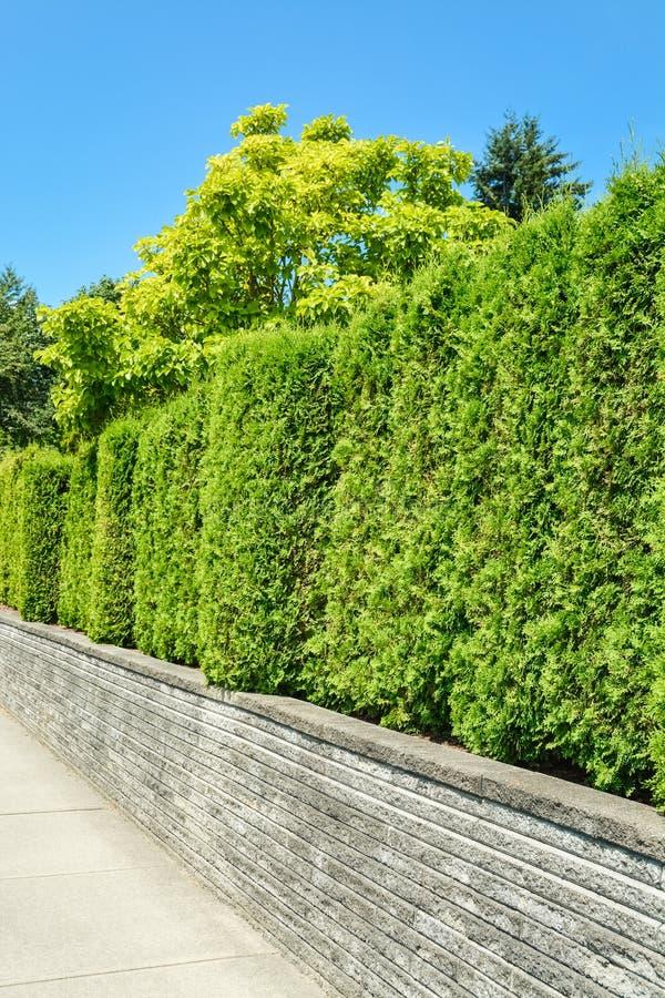 在具体大阳台的高绿色树篱有蓝天背景 免版税库存图片