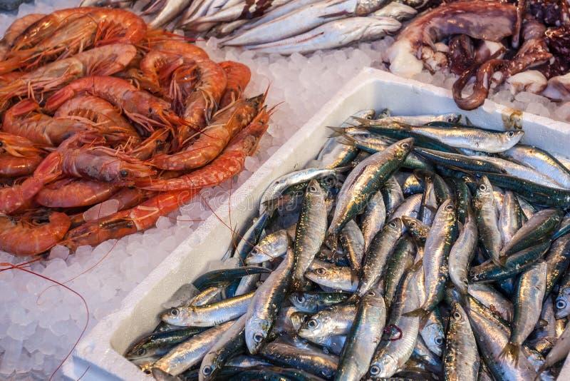 在养鱼塘长凳的另外鲜鱼 皇族释放例证