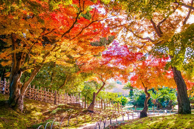 在冈山城堡的秋叶停放,日本 免版税库存照片