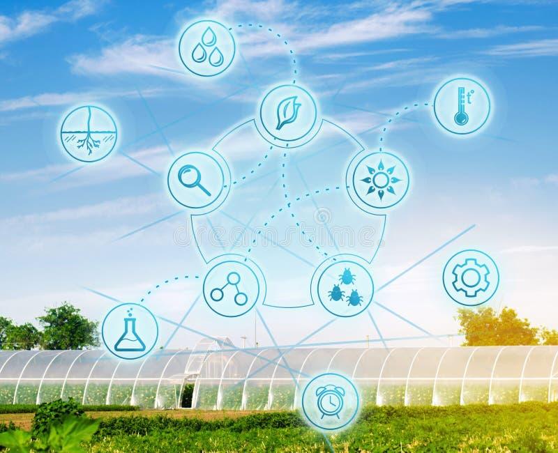 在农业文化产业的生物工艺学 高技术和创新 种田和农学 选择农业 免版税库存照片