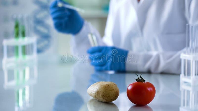 在农业的基因饲养,在实验室桌,做测试的科学家上的菜 图库摄影