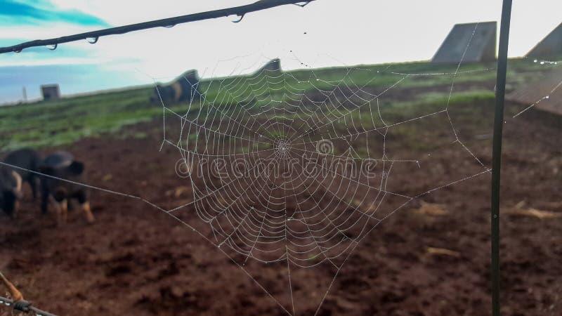 在农厂篱芭上的蜘蛛网 免版税图库摄影