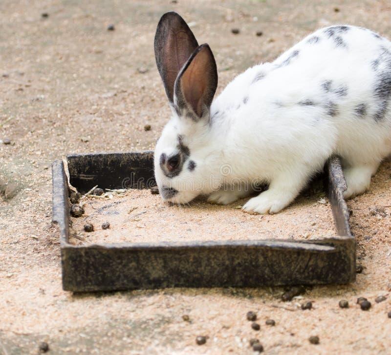 在农场的兔子,野营 免版税库存图片