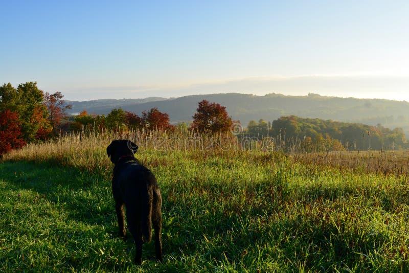 在农场的早晨步行 库存图片
