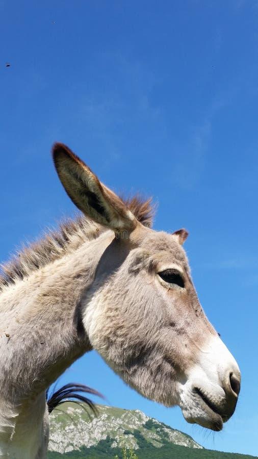 驴在农场 免版税库存图片