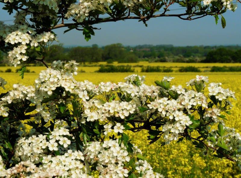 在农夫领域的夏令时 免版税图库摄影