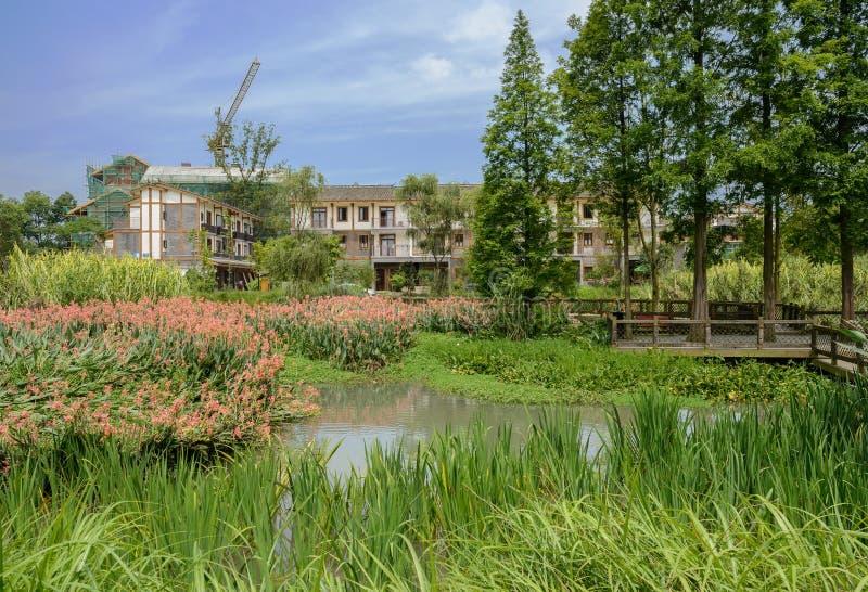 在农村住宅楼联合国前的象草和开花的湖边 免版税库存照片