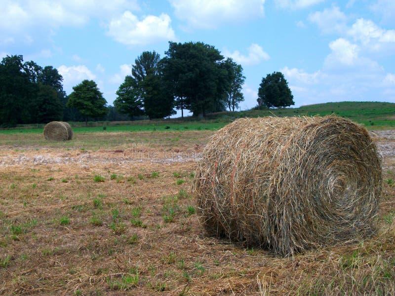 在农村农场的大干草劳斯 库存照片