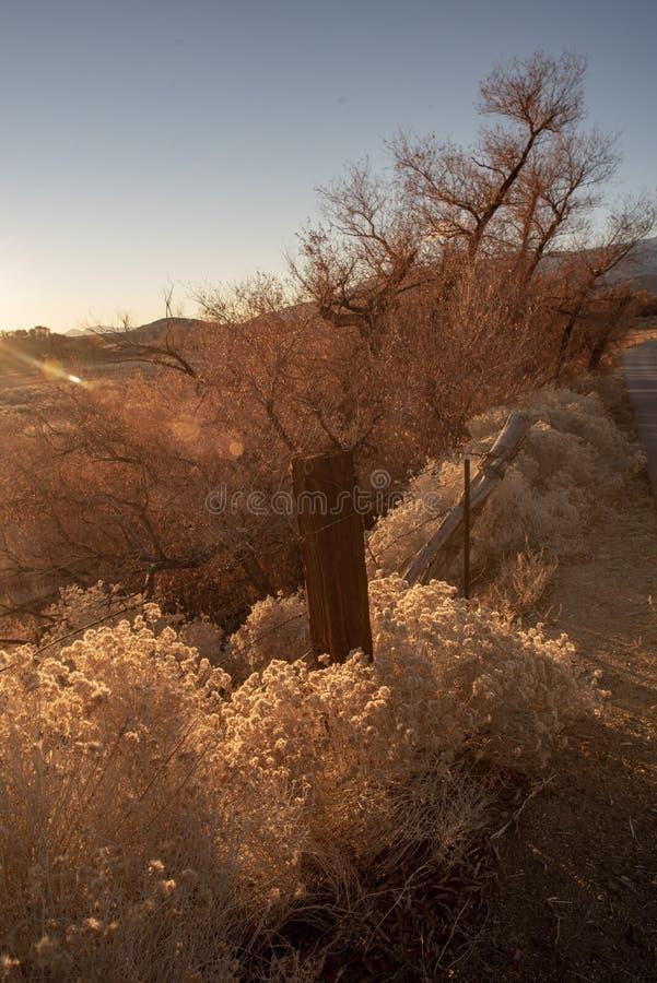 在农村加利福尼亚风景的早期的金黄秋天早晨沙漠野花fencepost 库存图片
