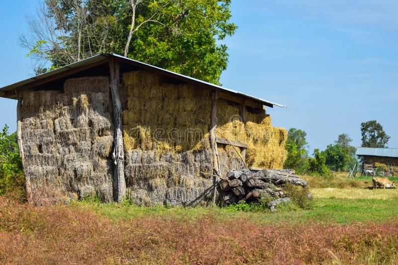 在农村木谷仓内部的泰国干燥干草堆 库存图片