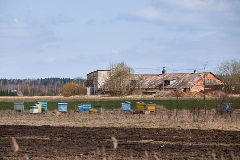 在农村的五颜六色的木蜂箱 免版税库存图片