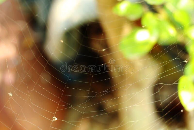 在农村的蜘蛛网在植物 免版税库存照片