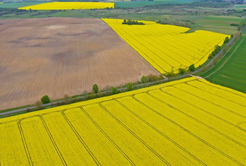 在农村风景的空中透视图与开花的油菜籽,对角线拖拉机轨道,被犁的土壤的黄色领域, 库存图片