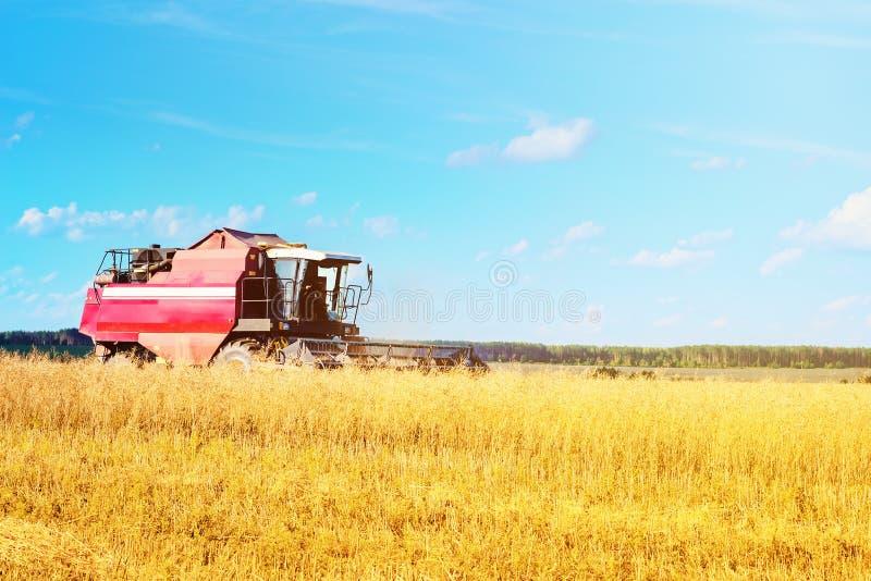在农田的联合收割机农业机器收割成熟麦子 免版税图库摄影