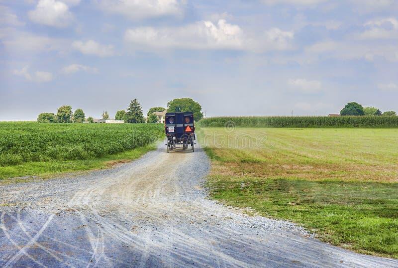 在农田的门诺派中的严紧派的马支架骑马 免版税图库摄影