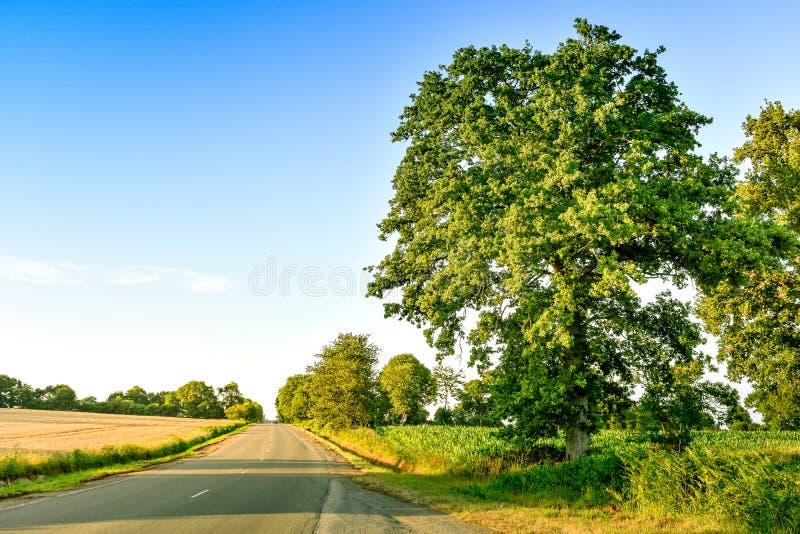 在农田,草甸和大树之间的乡下路,在日落 法国布里坦尼 免版税库存照片