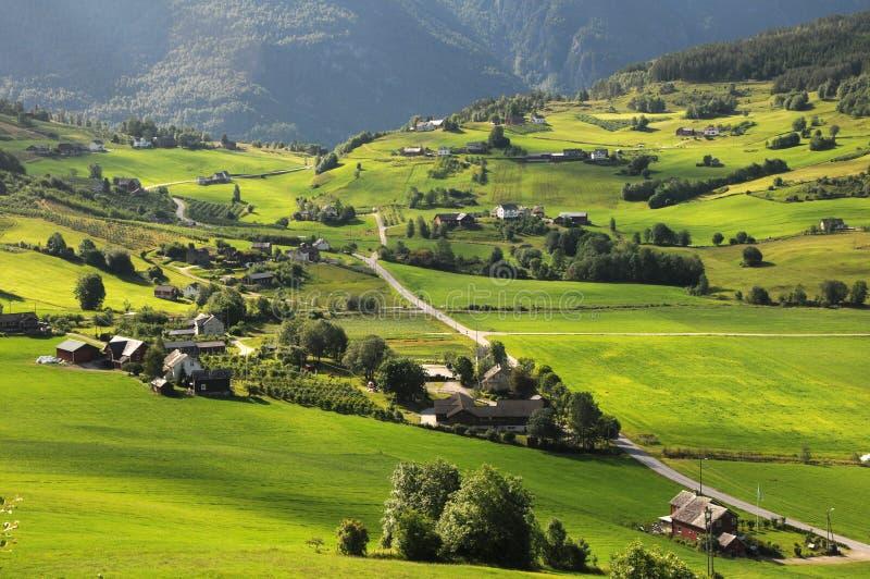 在农田hardangerfjord挪威附近 免版税库存图片
