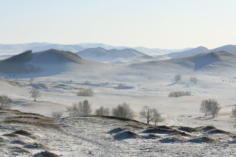 在冬天之下的草甸雪 免版税库存图片