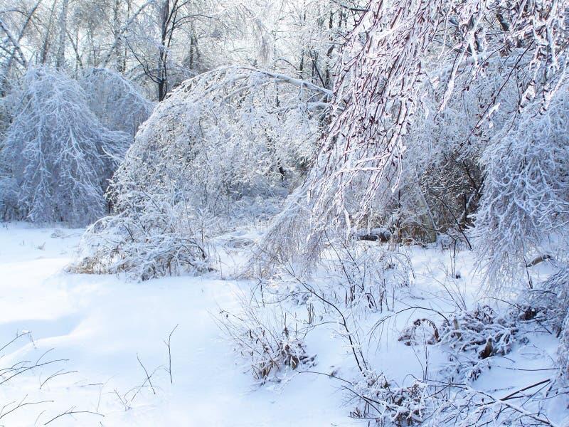 在冬天冰暴、雪和冻雨以后的给上釉的树枝 免版税库存图片