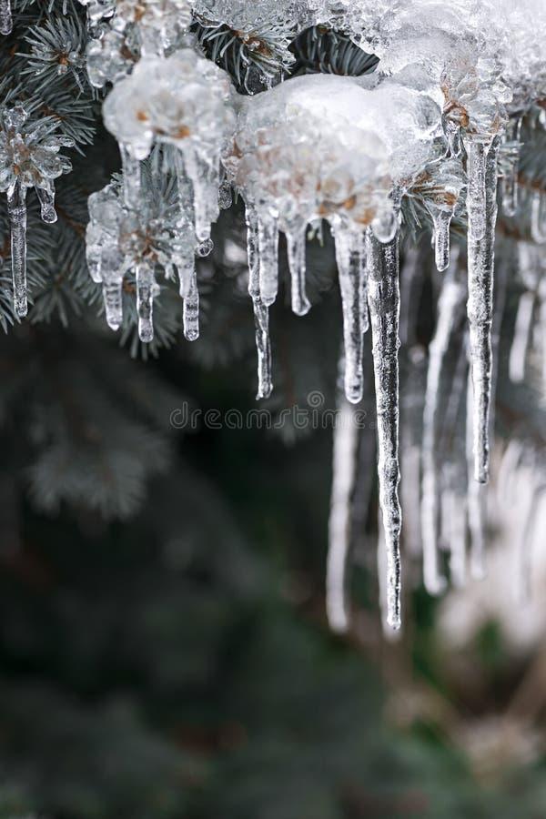 在冬天分支的冰柱 库存图片