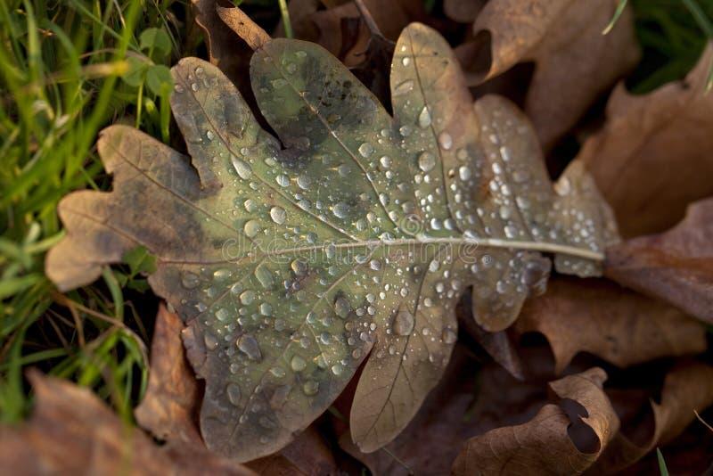 在冬天叶子的雨 免版税库存图片