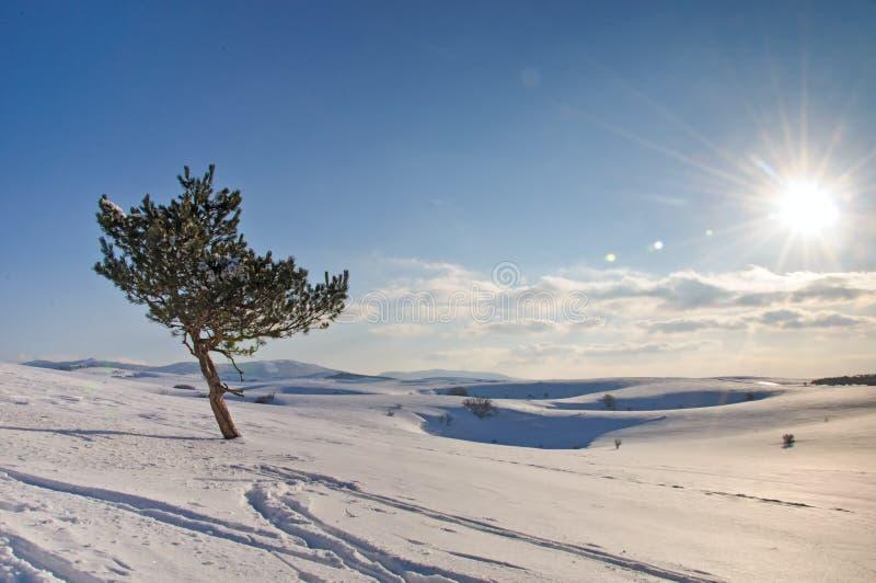 在冬天域和蓝天的冻结结构树 库存图片