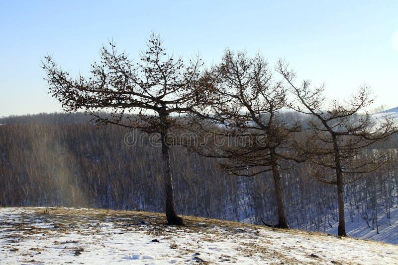 在冬天心情的树 免版税库存照片