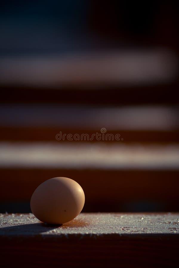 在冬天新近地采摘了在木基地的鸡蛋与霜 免版税库存照片