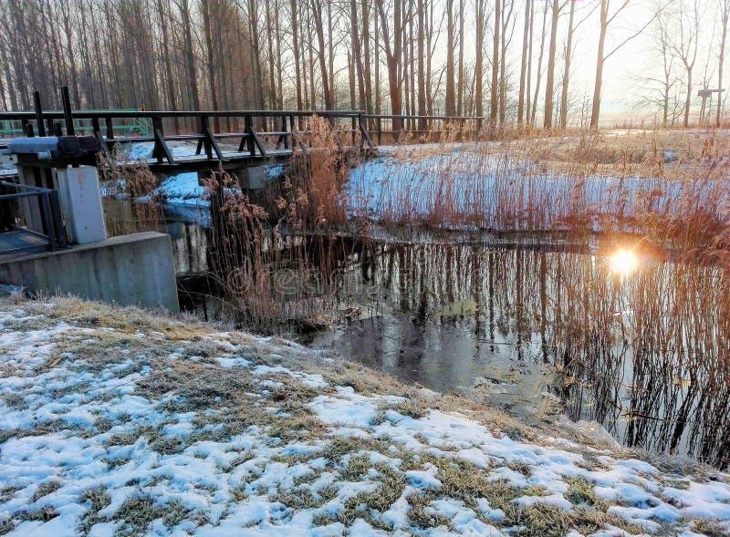 在冬天日出的Spreeforest 库存图片