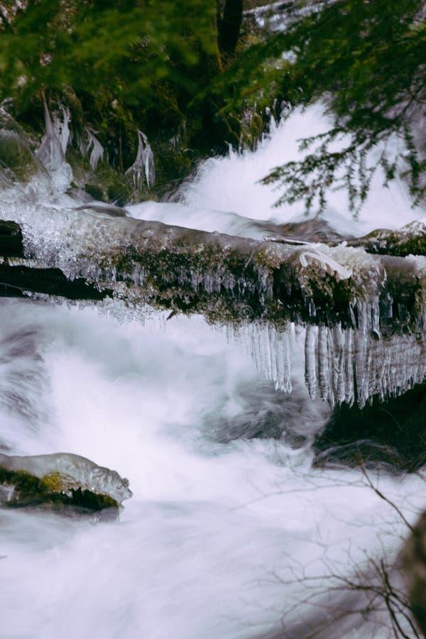 在冬天期间,一条河的美丽的射击有强流和冻结的注册的一个森林 免版税库存图片