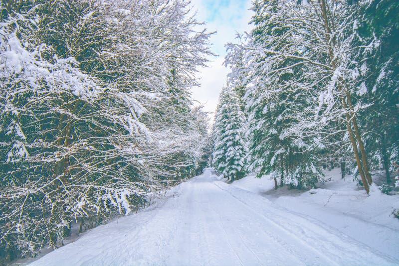 在冬天期间,斯诺伊森林公路 免版税库存照片