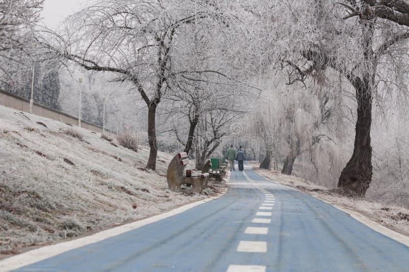 在冬天期间,自行车胡同在一个公园 免版税库存图片